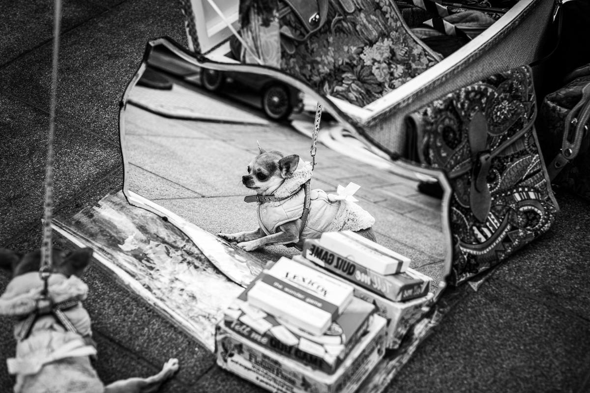 dog looking in mirror vintage car boot sale