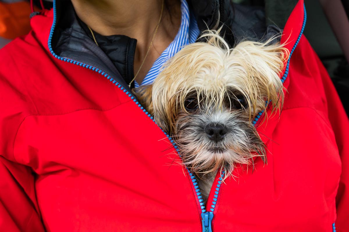 dog sheltering from rain london